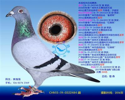 中港詹森�N��-484