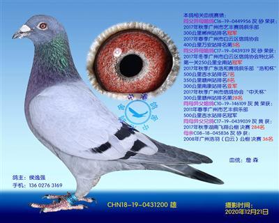 中港詹森�N��-200