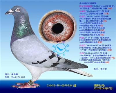 中港克拉克�N��-954