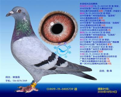 中港詹森�N��-739