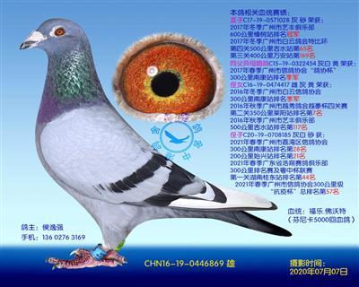 福乐.佛沃特种鸽-869