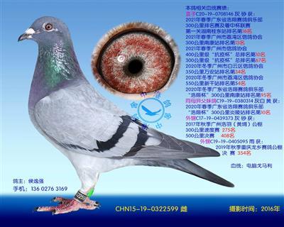 电脑戈马利种鸽-599