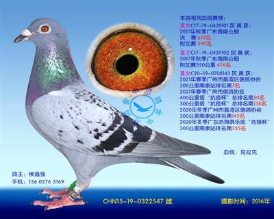 中港克拉克�N��-547