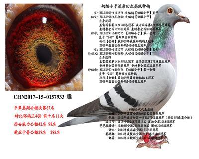 中国金瑞鸽业