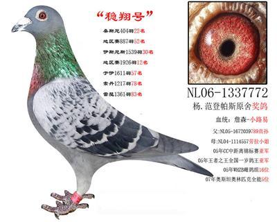 稳翔号772