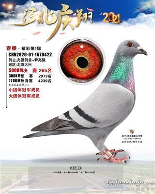 庆翔265