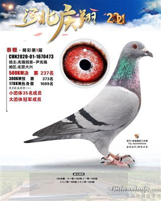 庆翔237