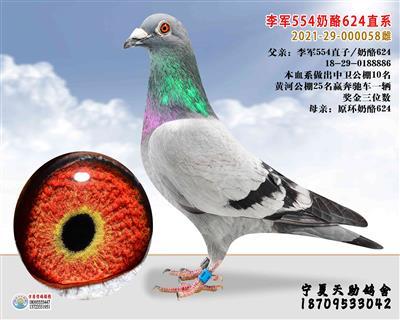 李军凡龙028奶酪624直系(售本市)