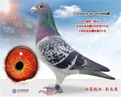 欣通胡本908