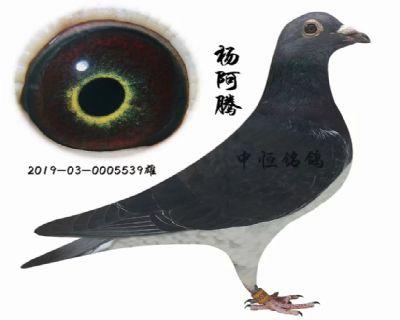 杨阿腾 漂亮金瞳