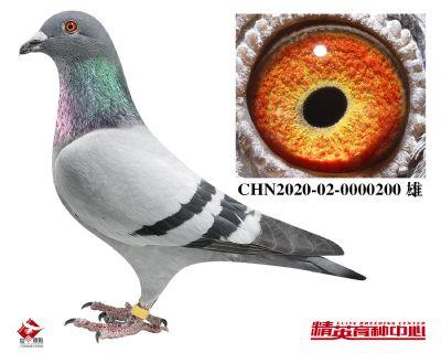 CHN2020-02-0000200