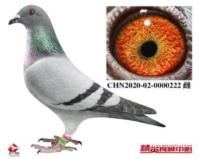 CHN2020-02-0000222