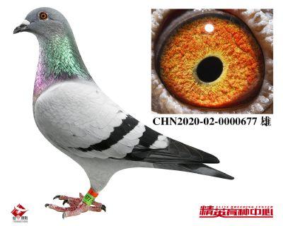 CHN2020-02-0000677