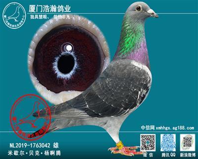 米歇尔・贝克・杨阿腾 原舍种鸽