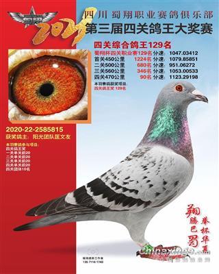 四川蜀翔职业赛鸽俱乐部四关综合鸽王129