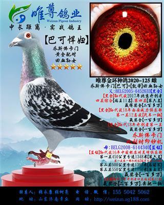"""【巴可悍妇】乔斯佛卡门""""黄金配对""""直孙女"""