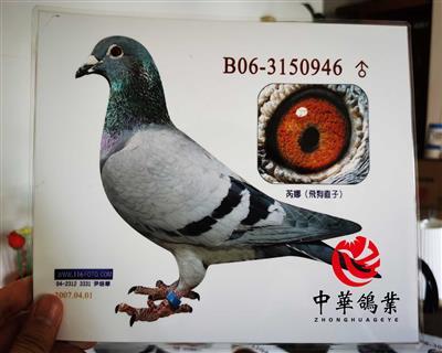 飞戈芮娜子B06-3150946
