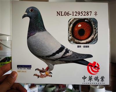 盖斯彼得斯NL06-1295287