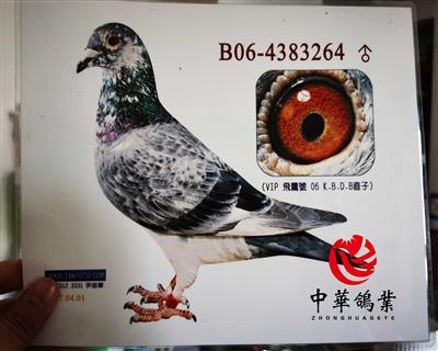 飞鹰号KBDB直子B06-4383264