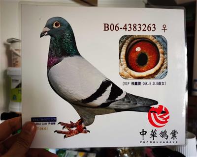 飞鹰号KBDB直子B06-4383263
