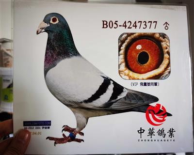 飞鹰号KBDB直子B05-4247377