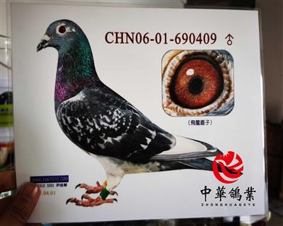 KBDB飞��直子CHN06-690409