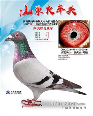 济南铁路局聊城火车头信鸽协会四关综合亚军