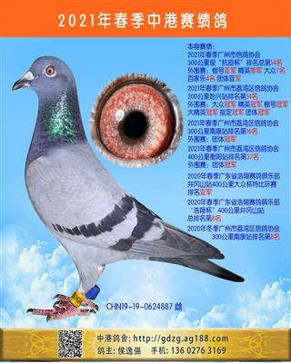 中港赛绩鸽-300公里第14名