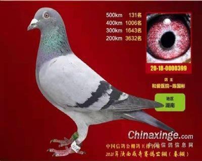 2021陕西威奇500KM131名