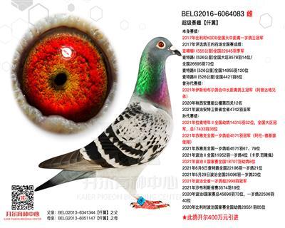 【仟翼】17年比利时全国大中距离鸽王冠军