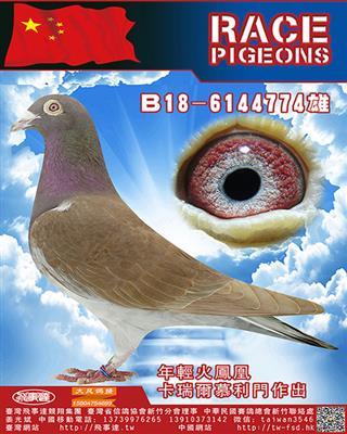 纯血慕利门火�P凰774