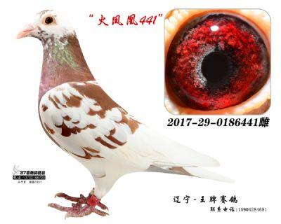 慕利门-火凤凰441