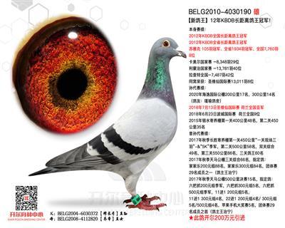 【新鸽王】:12年KBDB长距鸽王冠军!