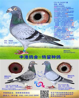 中港慕利门种鸽-907