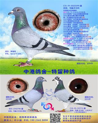 中港电脑戈马利种鸽-599
