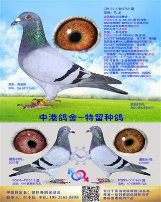 中港凡龙种鸽-759