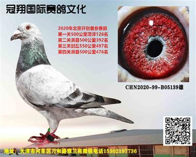 冠翔国际赛鸽文化