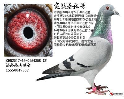 济南南山赛鸽俱乐部
