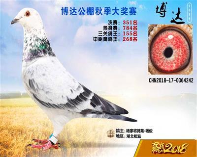 杨家将鸽苑