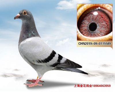 上海金花鸽业
