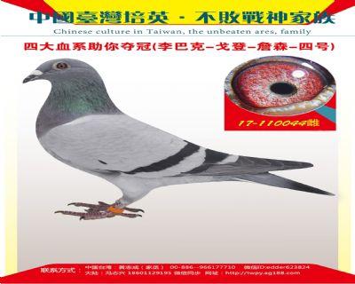 台湾培英鸽舍