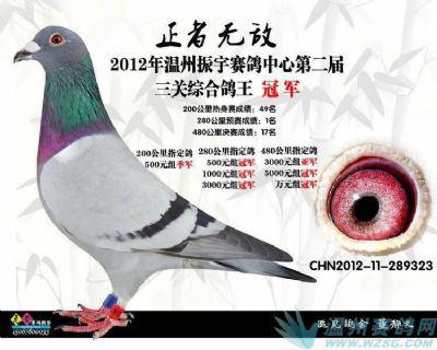 国际兄华鸽业