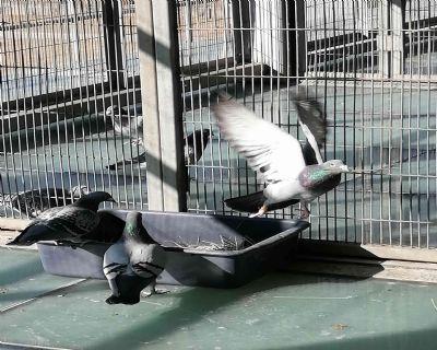 唐山开尔鸽业