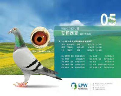 北京辉煌鸽舍