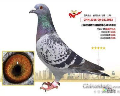 崔氏国际铭鸽育赛联盟