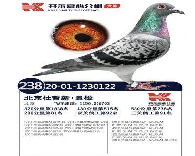 北京景松鸽舍